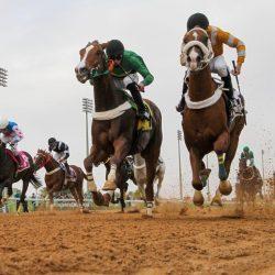 صحيفة الكاس في سلسلة تقريرية قبل انطلاق مهرجان الملوك لسباقات الخيل